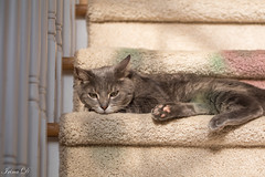 A sunny relaxing weekend to all and Happy Caturday from Max (Irina1010) Tags: max cat feline pet stairs sunny relaxing resting caturday canon