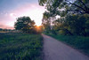 Hainberg Oberasbach (sabrinasteiger1) Tags: sunset sonnenuntergang hainberg oberasbach fürth deutschland germany licht gegenlicht light natur nature abend evening sonne sun feld blumenwiese