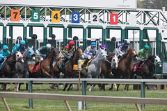 2018 Pimlico Race track (41) (maskirovka77) Tags: pimlico dirt mare race racehorse threeyearold turf yearling