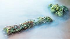 _NOC6550 (Vic Morrison) Tags: calblanque cartagena naturaleza detalles nature playa beach exposicion sony sonya6300 a6300