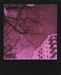 The day the sky turned pink (ale2000) Tags: polaroid analog analogue instant instantphotography polaroidoriginals slr680 600 duochrome pink rosa black nero square frame blackframe urban above lookingup tree branches alberi rami città skyporn treeporn building palazzo condominio pinksky cielorosa firenze florence