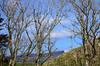 By Cnoc Alasdair (megalithicmatt) Tags: trees cnocalasdair isleofmuck eigg