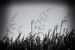 Spring (Salva Pagès) Tags: spring primavera blancoynegro blancinegre blackandwhite blancetnoir monochrome monocromo vegetación vegetació contrallum contraluz backlight