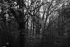 Canemah Bluff (Tony Pulokas) Tags: spring oregon bokeh blur leaf forest oregoncity canemahbluffnaturepark tree maple bigleafmaple tilt canemahbluff