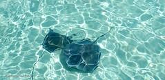 Molten Stingrays (Acquarius Sea Tours) Tags: swimmingwithstingraysingrandcayman grandcaymanislandswimingwithstingrays swimwithstingraysingrandcayman stingraycitygrandcayman deluxestingraycitysandbar acquariusseatours ky