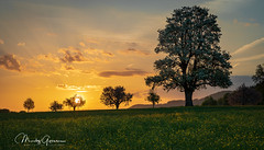 Sunrise in the spring (moritzgyssler) Tags: pear baselland spring rünenberg sunrise tree birnbaum nature