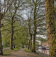 Riverside Walk (jack cousin) Tags: england riverouse spring uk york yorkshire apartments barge bark bird boat bough branch budding buds building bush city duck earth environment foliage landscape lane leaf leaves lineoftrees moss multistorey nature outdoors path peaceful reflection river riverbank riverboat road serene shade shrub sky tranquil tranquility tree treetrunk trees verge water nikond610 on1photos