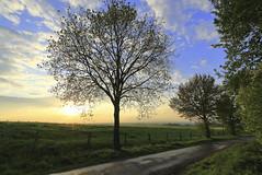 Abend im Frühling 2018 (Rolf Pahnhenrich) Tags: sonnenuntergang wolkenhimmel rolfpahnhenrich sonne wolken sonnenlicht wiese westfalen licht frühling himmel baum abendlandschaft landschaft abendhimmel