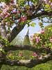 Oast and Apple Blossom (Gareth Christian) Tags: sonydschx90v kentwildlifetrust boughbeech kwt orchard apple blossom oasthouse oast nature tree appletree