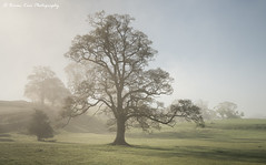 Sunday Morning Serenity (.Brian Kerr Photography.) Tags: cumbria edenvalley armathwaite lazonby trees mistymorning weather availablelight a7rii sony formatthitech firecrest vanguarduk briankerrphotography briankerrphoto landscapephotography photography landscape serenity peaceful calm quite sunday morning kozubooks