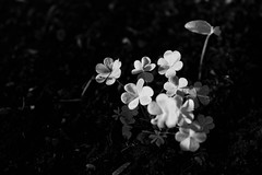 One moment can change a day One day can change a life One life can change the world (jjpereznunez) Tags: canon mexican michoacán mexico wanderlust wanderer beauty conceptual monocrome blackandwhite dark nature