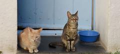 Cat house Cadaqués (Meino NL) Tags: cathousecadaques catalunya catalonië españa espagne costabrava spain spanje cadaqués cats