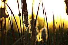 Últimas luces (portalealba on holidays) Tags: zaragoza zaragozaparque aragon españa spain sunset sol atardecer canon eos1300d 1001nights 1001nightsmagiccity 1001nightsmagicwindow 1001nightsmagicgarden