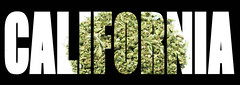 """On the Fringe of California Cannabis Investing: Avoiding """"Ownership"""" and """"Financial Interests"""" (jodieshazel) Tags: weed marijuana pot cannabis green herb hemp drug plant illegal leaf medical nature medicine grass medicinal dope narcotic addiction background natural symbol hashish smoke high ganja isolated addictive legalize prescription joint agriculture herbal marihuana bud abstract healthcare medication relax grunge california newkeyword cali ca"""