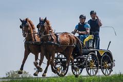 Schwebende Pferde (Bastian Güldner) Tags: fahrturnier pferde wettringen kutsche