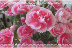 Happy Mother's Day (bigbrowneyez) Tags: flowers carnations fancy delicate elegant dedication tribute happymothersday beautiful lovely soft dreamy belli bellissimi fori pink twotoned love amore wise mom moms fresh gifted gift regalo sunday may132018 striking lacy amazing stunnng fantastic fabulous pretty frame cornice blossoms bouquet domenica maggio mamma giornodellemamme