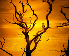 Bird in the Tree Reaching for Heaven (JDS Fine Art Photography) Tags: sunset tree bird minimalism nature