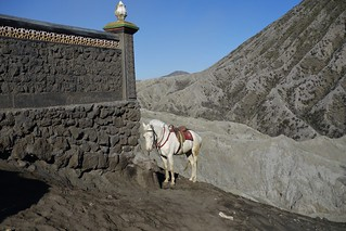 INDONESIA, Java,  wonderful horse in the caldera (sandy sea) At the Tengger volcano massif (Bromo), 17457/10018