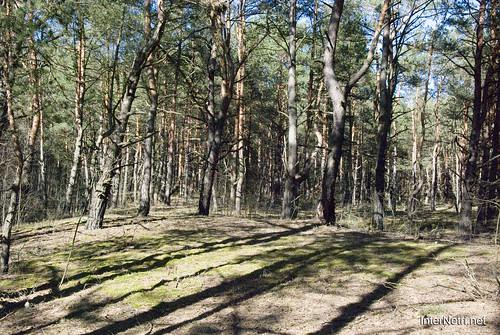 Волинський ліс InterNetri Ukraine 1160781527