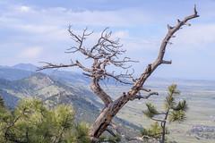 Looking north from Mount Sanitas (mccobb) Tags: mccobb nikon d850 landscape mountain boulder colorado rockymountains rockies