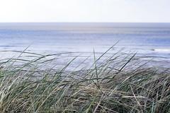 Strandgras   Grass on the beach (MLopht   Dortmund) Tags: northsea norddeutschland strand sand beach weise düne meer wasser ozean nordsee norderney nordküste insel ostfriesland himmel küste canon eos 7d mkii eos7d 50mm strandgras gras grass