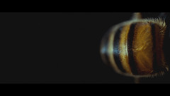 Bee (2) (Samuel Portilla) Tags: bee abeja low key insecto insect macrofotografía macro macrophotography macromondays yellow orange cinematography cinematografía cinematic cinematico canon reversed lens 1855mm 2351 noise ruido grainy grano grain