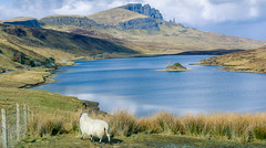 Enjoying the view.jpg (Jonny2stops) Tags: storr oldmanofstorr sunny sheep canon isleofskye highlands blue water animal iso100 lightroom lake bright efs clouds loch lochleathan f80 1855mm scotland amateur skye 1400 kitlens island sky green 1200d scottish uk fence