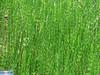 IMG_4083 (superingo78) Tags: eifel hohes venn wiesen moor grün natur monschau birken holzsteg nadelwald laubwald