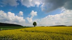 Germany_Spring (Lothar Heller) Tags: lotharheller bavaria bayern deutschland germany sky spring tree yellow