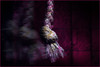 A few scraps of cloth. Lead to freedom. (Gudzwi) Tags: clothtextile scraps fetzen stofftextil band ribbon movement intentionalmovement bewegung bewegungsunschärfe movementblur macro makro closeup unschärfe blur blurry fuzziness mm hmm macromondays macroandcloseup macromondaysmay14lowkey lowkey geringeslicht pink geflochten braided seitenlicht sidelit sidelight drahtglas wiredglass mehrfachbelichtung multipleexposure überblendung crossfade fotomontage photomontage