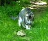 Vorsicht, komische Tiere laufen durch den Garten :-) (isajachevalier) Tags: katze schildkröte tier haustier cat panasonicdmcfz150