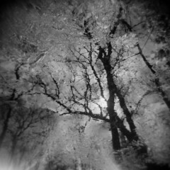 From the Ground Up #3 (LowerDarnley) Tags: holga woods morningwalk trees branches baretrees wet mud water reflections middlesexfellsreservation sun
