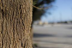 Tamron SP 35mm F/1.8 Di VC USD (Paulo Calafate) Tags: tamronsp35mmf18divcusd canon5dmarkiv tree