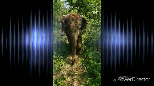 Elephant Rescue Park Chiang Mai, Thailand