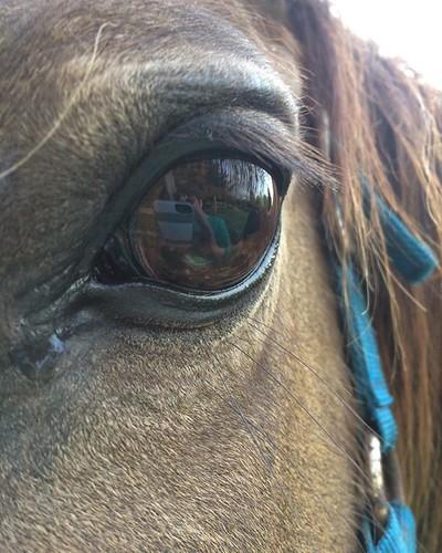 Pony eyes.....me in her eyes #pony #eyes #eyelashes #reflection #amityfarmbatik