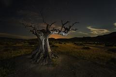 THE OLD AND FAR WEST (Der_Golem_) Tags: 2018 almeria tabernas desierto arbol solitario abandonado escenario luzfria ledlenser nocturna luna ojodepez flash