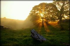 Sunrise in Fere Dale (Simon Corble) Tags: lathkilldale sunrise morning earlymorninglight derbyshire derbyshiredalesnationalpark derbyshirewildlife derbyshiredalesnationalnaturereserve derbyshiredale dale peakdistrict peakdistrictnationalpark whitepeak monyash