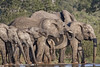 Refreshing Drink for all (memories-in-motion) Tags: elephant group family water hole drink refresthment 8 eight big southafrica nature wilderness hot portrait canon eos 7dmarkii ef70300mm africa