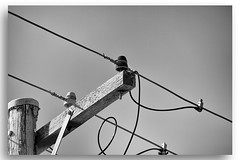 Electricity Pole and Wires (Bear Dale) Tags: just simple bw an electricity pole wires south coast new wales australia nikon d850