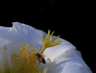 Bee Kind...Rewind