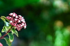 primavera (sitoelone) Tags: flor naturaleza bosque primavera