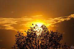 Sunset / @ DRS / 2018-04-29 (astrofreak81) Tags: sunset bird drs dresden sun