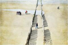 Mer du Nord et plage, Dombourg, Walcheren, Zeelande, Nederland (claude lina) Tags: claudelina nederland paysbas hollande zeeland zélande dombourg plage beach mer sea merdunord noordzee dunes poteaux