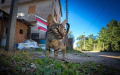 Gatinha do Mato (Wild Pussycat) (Lon Winchester Photography) Tags: canonef1740mmf4lusm bwfilter cplfilter polarizerfilter filtropolarizado catswideangle cutecat cat kitten pussycat canoneos6d