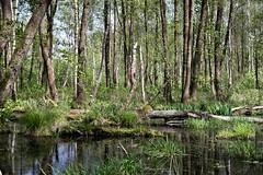 IMGP14150 (Łukasz Z.) Tags: starezaucze lubelskie rzeczpospolitapolska poleskiparknarodowy nationalpark sigma1750mmf28exdchsm pentaxk3