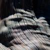 In Canyons 229 (noahbw) Tags: capitolreefnationalpark d5000 dof hinkmanbridgetrail nikon utah abstract autumn blur depthoffield desert light lines natural noahbw ripples shadow square tree treebark treetrunk