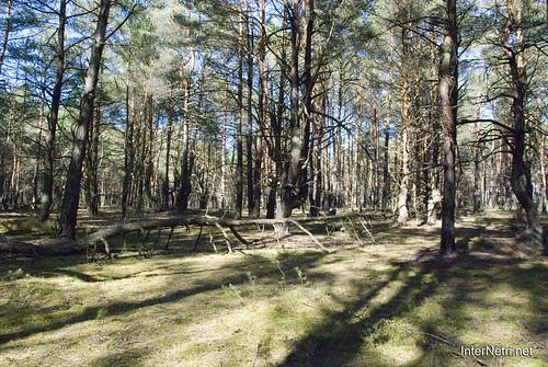 Волинський ліс InterNetri Ukraine 0525841071