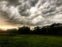 Before Storm!! (Tuhinahmedbd) Tags: landscape naturelover hiking rainyday awesomebangladesh photography iphone6 iphonephotography discover awesome love trees natural snapseed ihdr hdr beforestorm rain cloud sylhet bangladesh