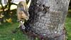 Anyone Seen Mi Cat? (Poocher7) Tags: jamaica westindies caribbean animal wild stray cat palmtree sniffing checkingtingsout grass gato 猫 kat chat katze γάτα חתול बिल्ली gatto kot kedi conmèo skinnycat