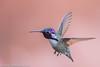 Costa's Hummingbird (gvall66) Tags: arizona az backyard blackchinnedhummingbird casafernandez d500 feeder nikon nikon200500 sedona hummingbird